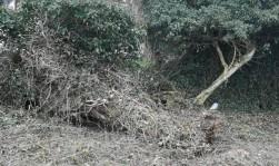 Baum entfernen 2