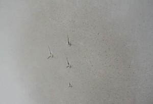 Igelschen zeigen Steckdosen